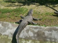 Arkansas Alligator Zoo