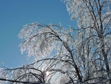 The Ice Storm: Ice on Trees