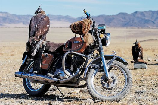 There are three things a real man should have: a fast horse, a hound, and a golden eagle...Kazakh Proverb.