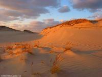 Cape Code Dunes