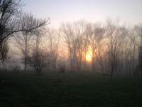foggy Kentucky sunrise