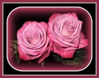 Pinknblack two-perfect-roses