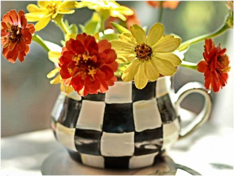 Zinnias in a Checkered Pot