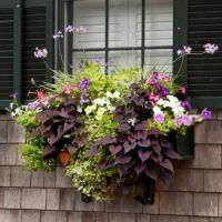 another pretty window box