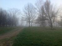 foggy Kentucky morning
