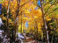 Theme - Autumn colors - Flattop Trail, Rocky Mountain National Park, Colorado