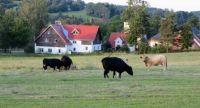 Na pastvě - on pasture, CR