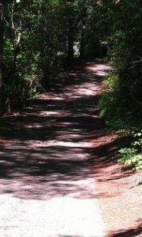 Calming walk in the woods