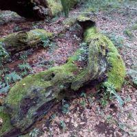 Dorrigo Moss