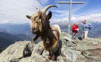 8,000 feet and climbing