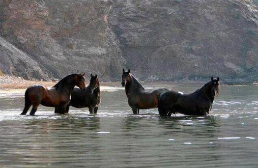 Horse Beauty. 2015