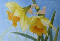 daffodils in watercolor