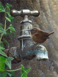 Wow... !!! Wren on a tap...