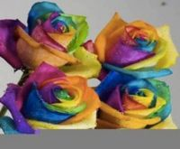 image001-colorful roses