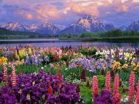 Kvetiny, hory, voda...