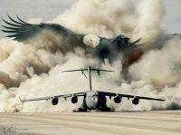 eagle and plane