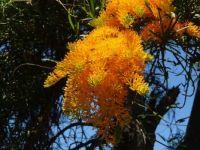 Xmas tree 1