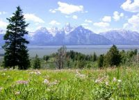 Theme U.S.A. - Grand Teton National Park, Wyoming.  Easier