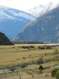 NZ south island meadow
