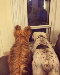 Grandpuppy And Friend On Sentry Duty