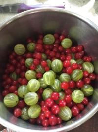 Gooseberries and redcurrants ready for a crumble 😋