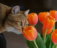 Cats-And-Flower
