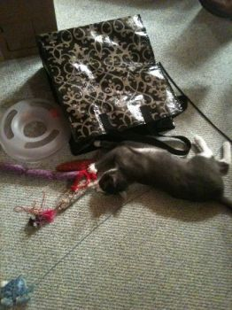Daisy and her mess!