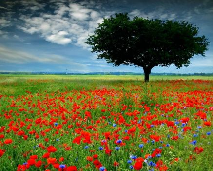 Flower-Meadow
