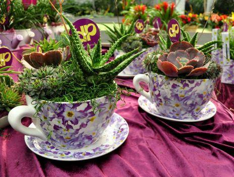Unusual tea party