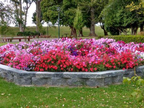 Splash of Colour in our Park