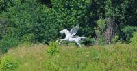 Pegasus sighting