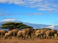 below Kilimanjaro