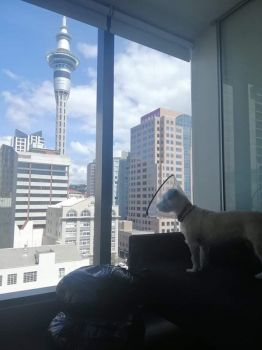 Frida Looking at Auckland's City-scape
