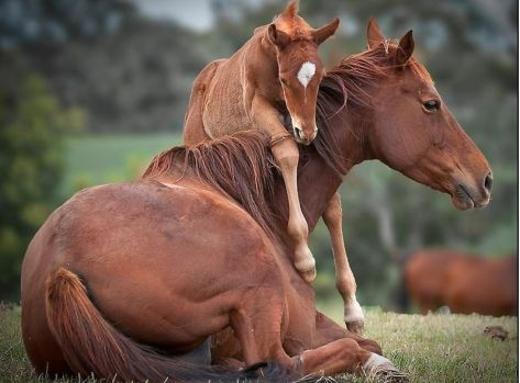 Mom and baby horse