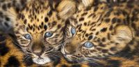 4.  ~  The C.L.C's  (Cute Leopard Cubs) ;-)