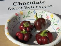 Super cute and tiny Chocolate Sweet Bell Peppers