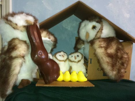 Owls R Us at Easter