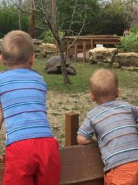 my grandsons....they love tortoises like me...
