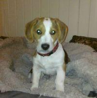 Spot, 3,5 months old