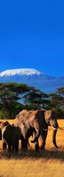 Mt Kilimanjaro, Amboseli National Park, Kenya