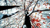 Joni Harless Charleston WV beech trees