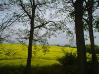 Rapefield and Baltic See