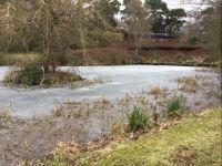 Theme Garden development Wildlife pond