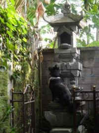 Mulan is watching a tiny kitten atop the tall stone wall.