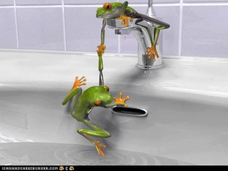For Rob...love your frog puzzles...but beware of TICA!!!