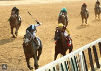 Tapwrit won the 2017 Belmont Stakes