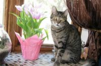 For the cat lovers - Farzzle