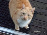 Mischief Neighbours cat