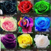 9 roser