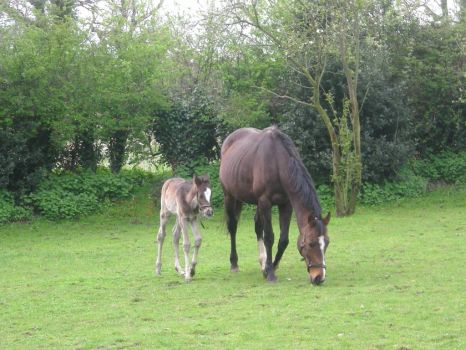 Mare with 5 day old foal at foot